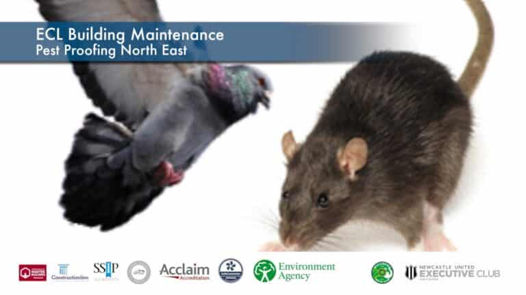 Pest Proofing North East